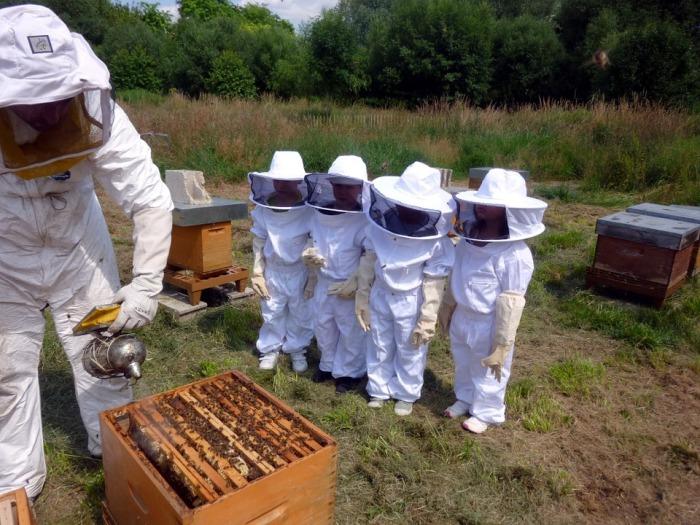beekeeping-803495_960_720
